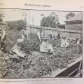 School children harvesting and weighing potatoes 1917